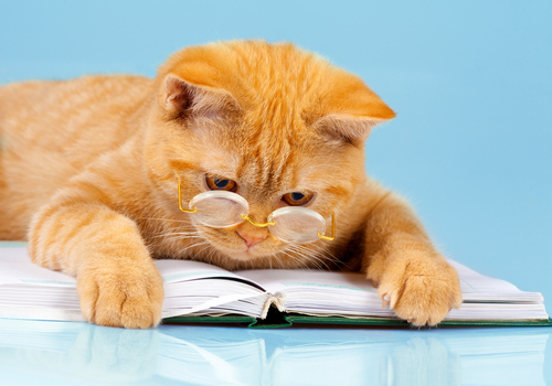 okos macska