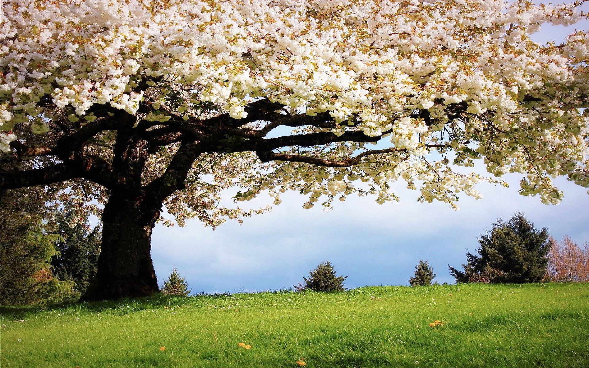 tavasz-háttérkép