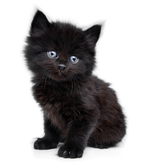 Fluffy Black Kittens With Blue Eyes Péntek 13 – min...