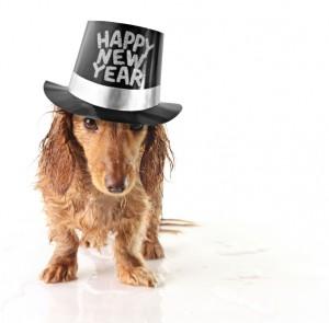 újévi kutya