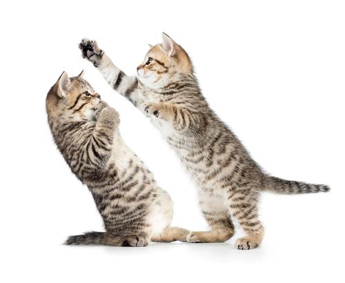 boxolo macskak