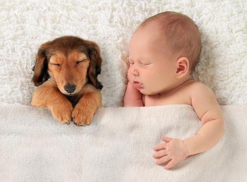 Álmos névnap - Álmos kutya álmos baba