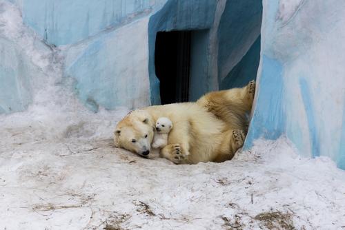 Gerda névnap - Gerda jegesmedve bocsával