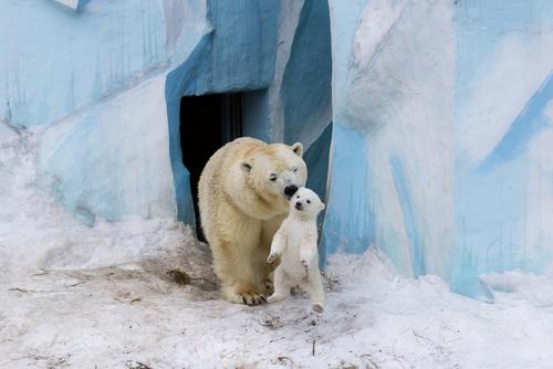 Gerda névnap - Gerda jegesmedve
