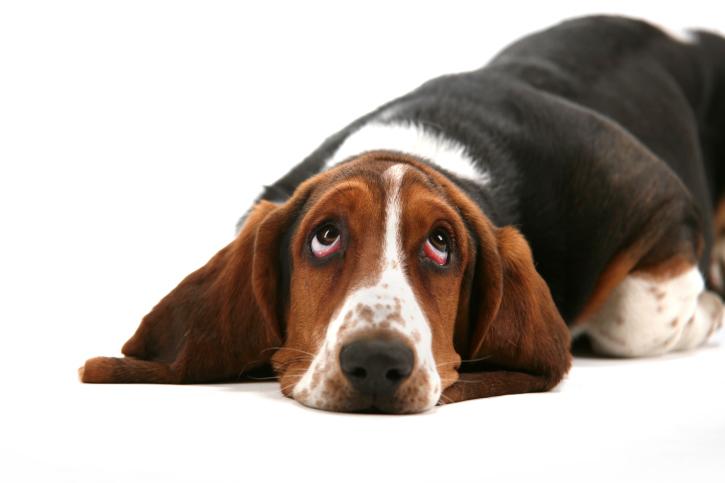 szomoru kutya
