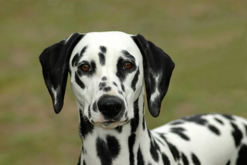 Cézár névnap - jelentős kutyanévnap