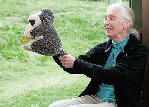 Janka névnap -  Jane Goodall