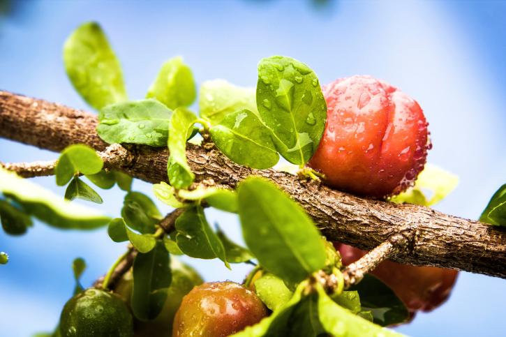 a 10 legjobb gyümölcs a has karcsúságához