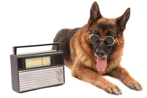 kutya rádióval