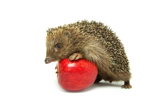 sün almával