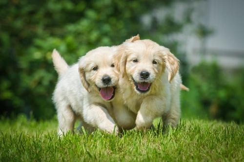 Felicitász névnap - boldog kutyák