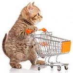 cat buy
