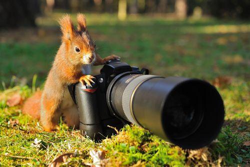 mókus fényképezőgép