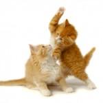 Harcoló macskák