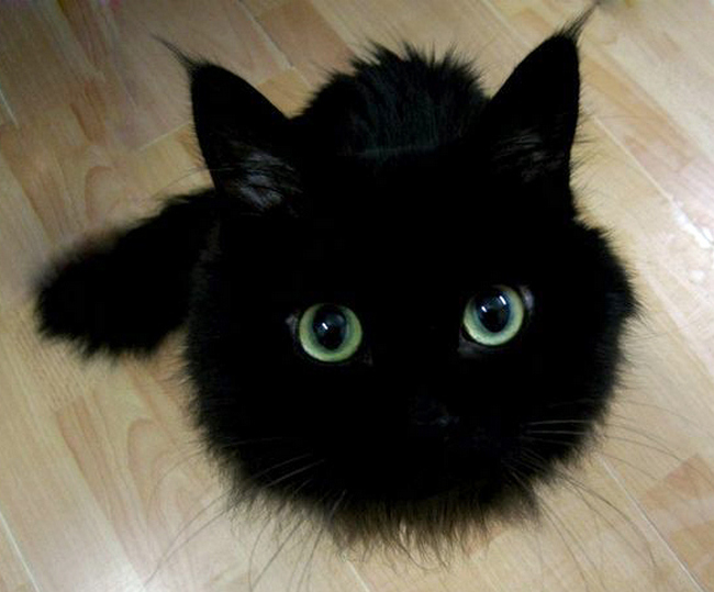 fekete-macska