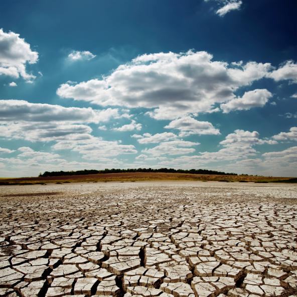 Elsivatagosodás elleni világnap