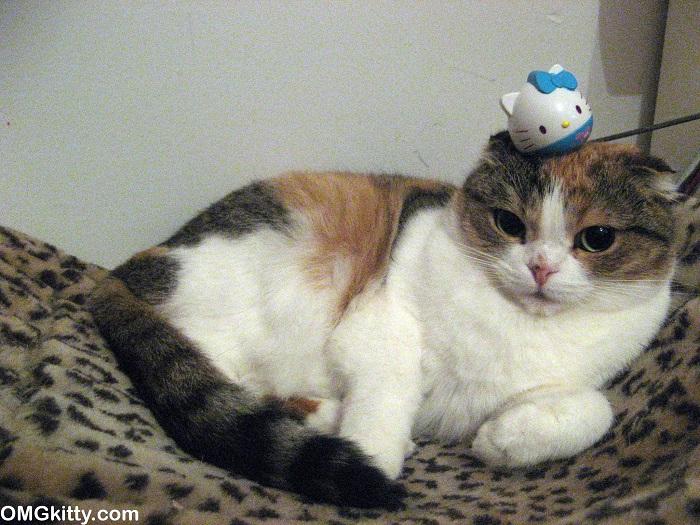 stuffoncat