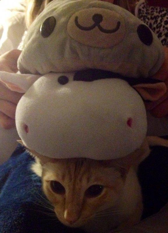 stuffoncat2