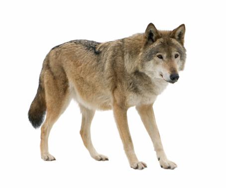 Farkas családnév