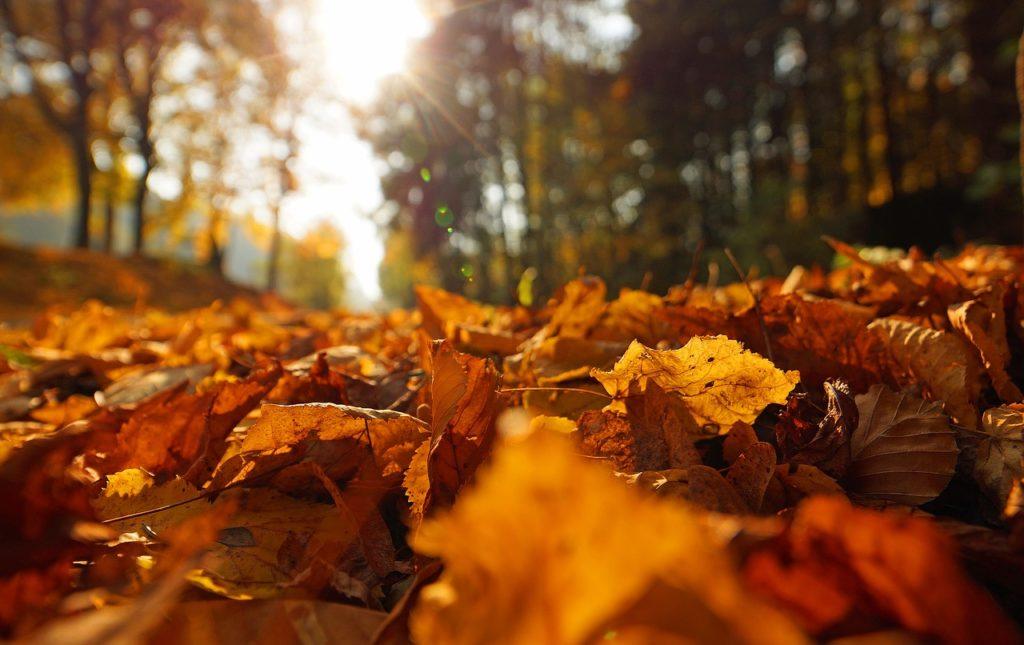 Mikor van az őszi szünet 2021-ben?